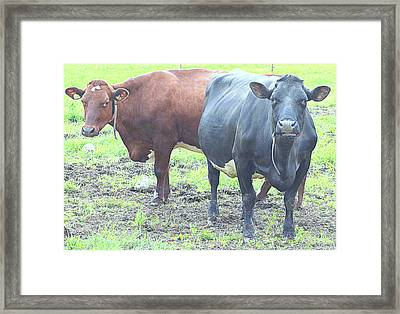 Come With Us And Get Some Milk  Framed Print