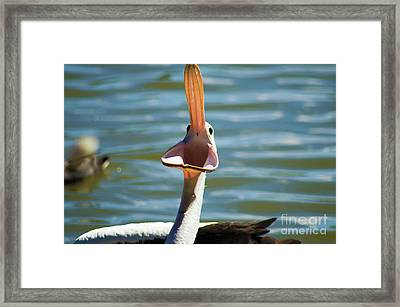 Comedian  Framed Print by Naomi Burgess