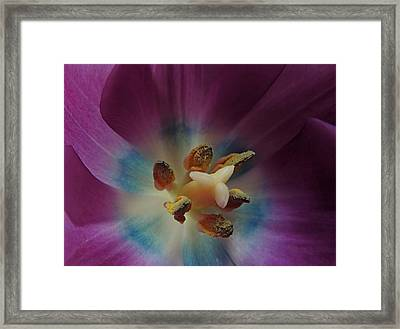 Come, Pollinate Me Framed Print