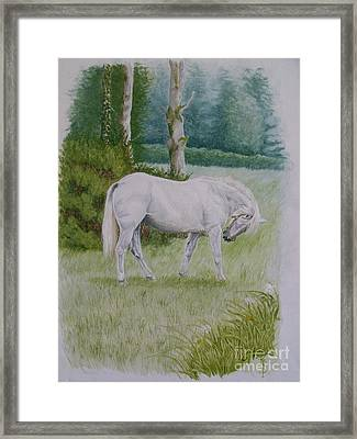 Comet-itchy Knee Framed Print by Pauline Sharp