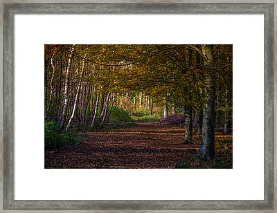 Framed Print featuring the photograph Comfort In These Woods by Odd Jeppesen
