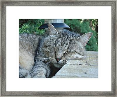 Comfortable Framed Print by DB Artist