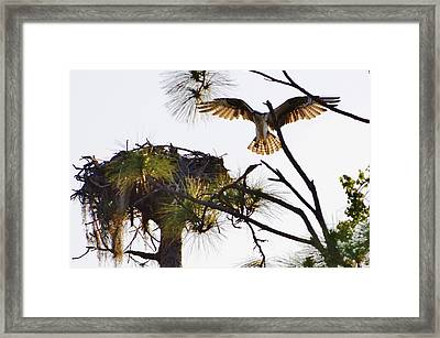 Comin' Home Framed Print by Don Youngclaus