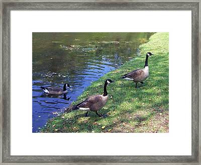 Coming Ashore Framed Print by Patricia Taylor