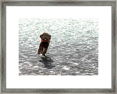 Coming Home Framed Print by Barbara  White