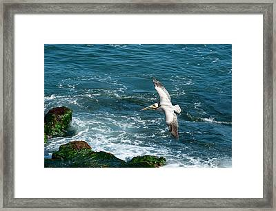 Coming In Framed Print by Sandra Bronstein