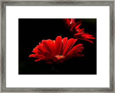 Coming In To The Light Framed Print by Sheila Brown