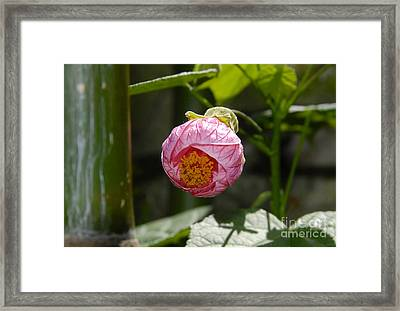 Coming Out Framed Print by David Lee Thompson