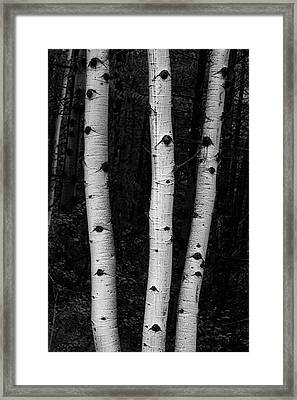 Framed Print featuring the photograph Coming Out Of Darkness by James BO Insogna
