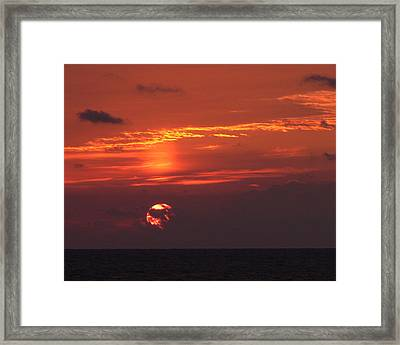 Coming Out Of Hiding Framed Print by Tom LoPresti