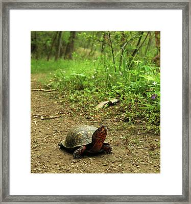 Coming Out Of My Shell. Framed Print