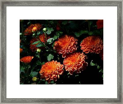 Coming Out Of The Shadows Framed Print