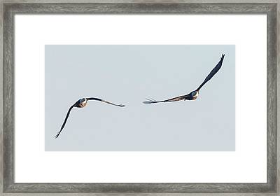 Framed Print featuring the photograph Coming Right At You - Two Bald Eagles by Ricky L Jones