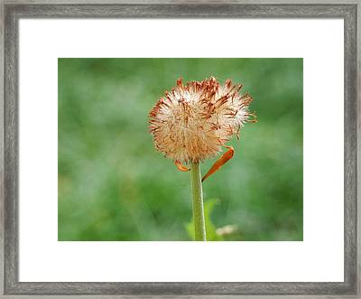 Coming To An End Framed Print by Betty-Anne McDonald