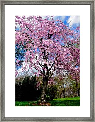 Coming To Life Framed Print by Frozen in Time Fine Art Photography