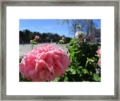 Coming To Town Framed Print