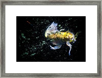 Framed Print featuring the photograph Coming Up For Air by Eric Christopher Jackson