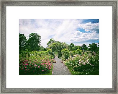 Coming Up Roses Framed Print by Jessica Jenney
