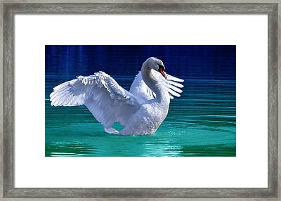 Command Presence Framed Print by Brian Stevens