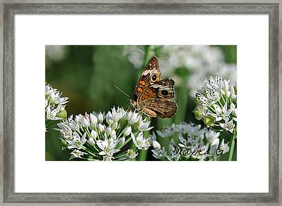 Common Buckeye Butterfly Framed Print