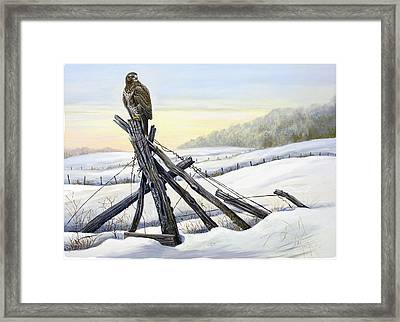 Common Buzzard In Winter Landscape Framed Print