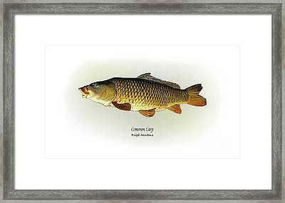 Common Carp Framed Print by Ralph Martens