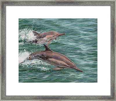 Common Dolphins Framed Print by David Stribbling