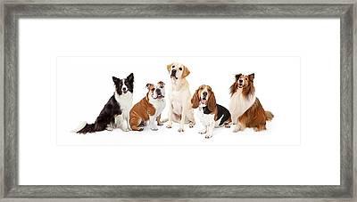 Common Family Dog Breeds Group Framed Print