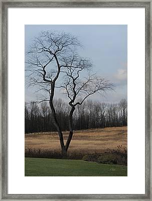 Barren Beauty Framed Print by Gordon Beck
