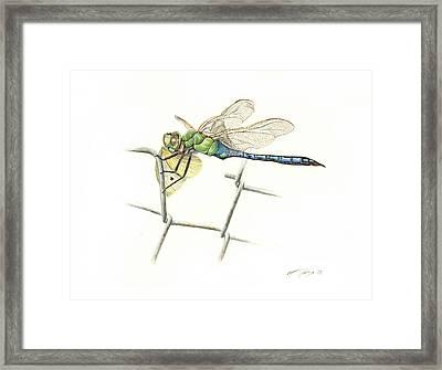 Common Green Darner Framed Print by Logan Parsons