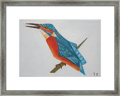 Common Kingfisher Framed Print