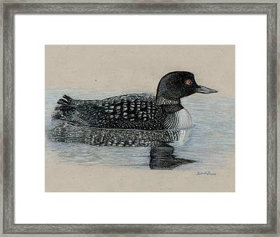 Common Loon Framed Print by Cynthia  Lanka