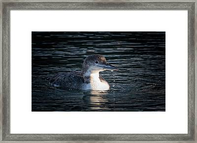 Framed Print featuring the photograph Common Loon by Randy Hall