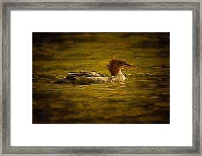 Common Merganser 2 Framed Print by Mark Kiver