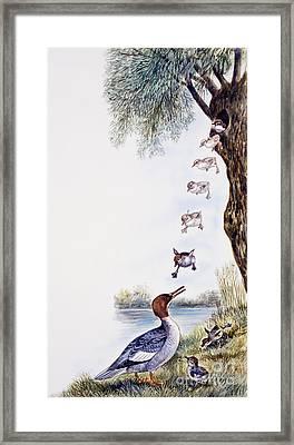 Common Merganser Or Goosander Chicks  Framed Print by Unknown