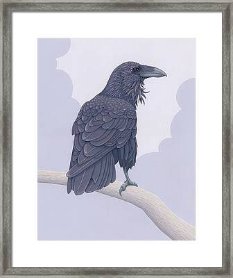 Common Raven Framed Print by Nathan Marcy