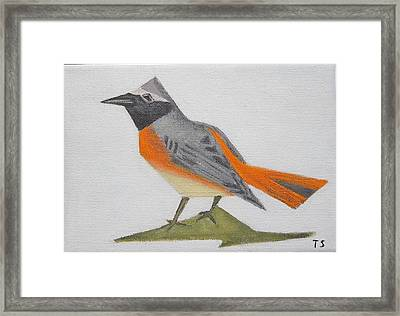 Common Redstart Framed Print