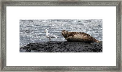 Common Seal And The Gull Framed Print