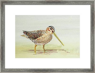 Common Snipe Wading Framed Print