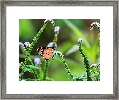Common Tiger Butterfly And Flowers Framed Print by Vishwanath Bhat