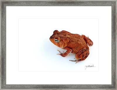 Common Yard Toad Framed Print