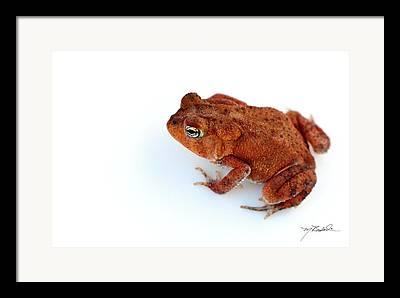 Toad Framed Prints