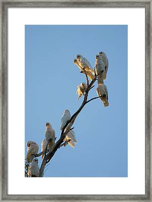 Communa-tree Framed Print by Mike  Dawson