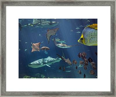 Community  Framed Print by Betsy Knapp
