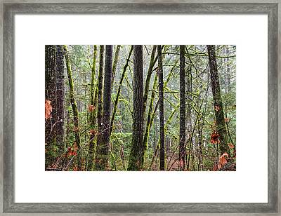 Comox Valley Forest-1 Framed Print