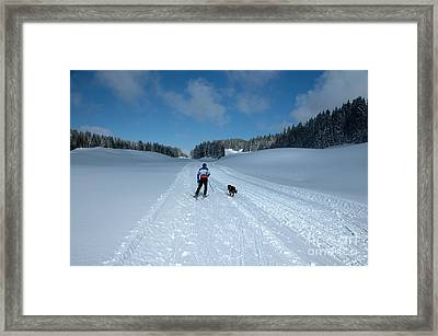Competitor In The Belgium Sleigh Dog Championships Framed Print by Neil Harrison