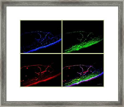 Complementary Cells And Colors-1 Framed Print