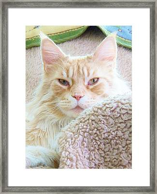 Complete Satisfaction Framed Print by Judy Via-Wolff