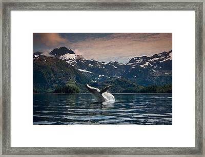 Composite Breaching Humpback Whale Framed Print