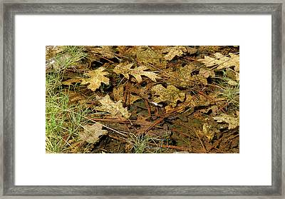 Composition In Brown And Green With Butterfly Framed Print by Larry Darnell